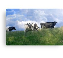 Cow Dreams Canvas Print