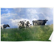 Cow Dreams Poster