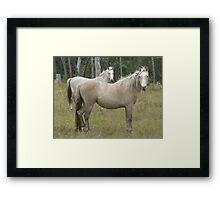 Wild Pony Stallion & Mare Framed Print