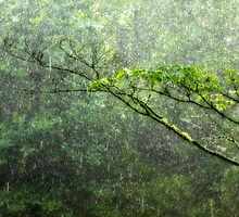 Rain Blessings by Tibby Steedly