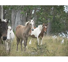 Young Fillies, Red Rock Photographic Print