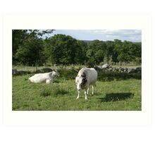 Cattle in Rural Landscape Art Print