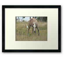 Wild Pony Filly & Egret Framed Print