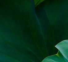 Green by Janos Sison