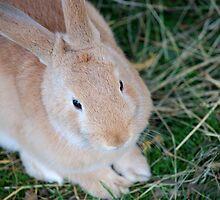 Bunny by Kristi Robertson