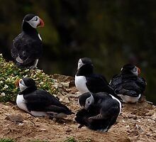 Chilling Puffin by Welshpixels