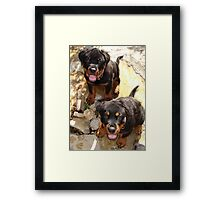 Clyde and Fluff (Rottweiler Puppies) Framed Print