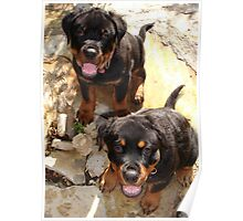 Clyde and Fluff (Rottweiler Puppies) Poster