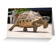 Marching Baby Tortoise  Greeting Card