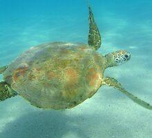 Sea Turtle by Chris Kean