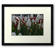 Downtown Tulips Framed Print