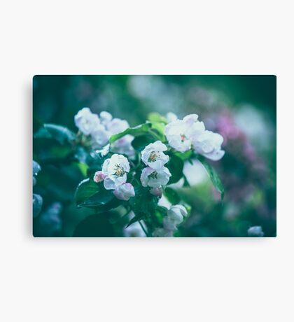 Dream Flower 6 Canvas Print