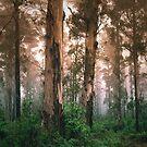 Mountain Grey Gum forest, Mount Macedon. by Ern Mainka