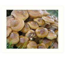 Autumnal Fungi Art Print