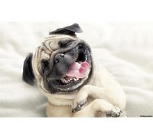 FUNNY DOG SMILEY Photographic Print