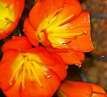 Vibrant by Sunflwrconcepts