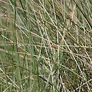 grass by Adriana Wasyk