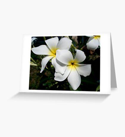 Frangipani/Plumeria Greeting Card