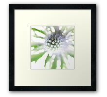 Sea Holly Haze Framed Print