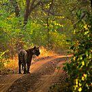 Jumeru by KitPhoto