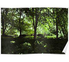 Summer Day Forest Scene Poster