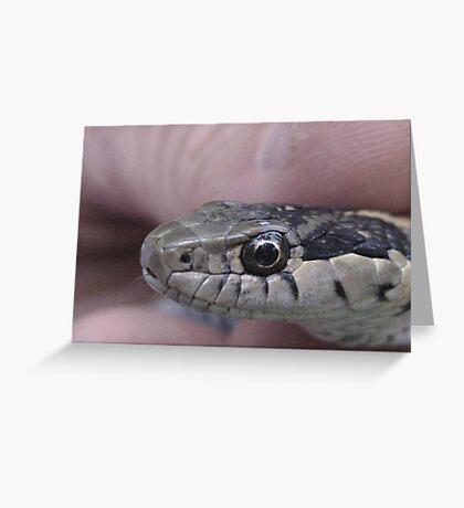Mr Garter Snake Greeting Card