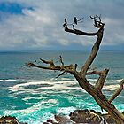Monterey Crow by photosbyflood