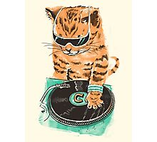 Scratch Master Kitty Cat Photographic Print