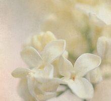 Cream Silk by Jacky Parker