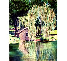 The Weeping Willow Tree Photographic Print
