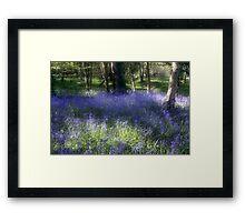 More Bluebells Framed Print