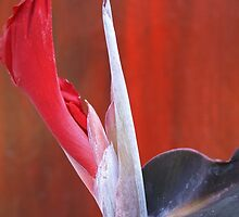ARTFUL FLOWERS - CANNA LILY by GeeGeeW