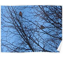 Mated Sky Finches  Poster