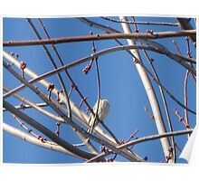 Solo Female Sky House Finch Poster