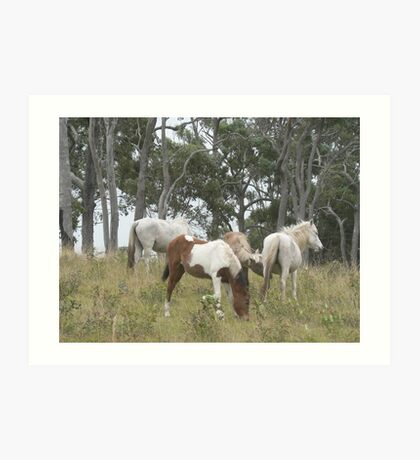 Wild Pony Mares & Foals Art Print
