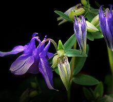 Purple Glory by Nadya Johnson