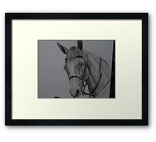 HORSE BUST WITH BRIDLE #2 pencil Framed Print