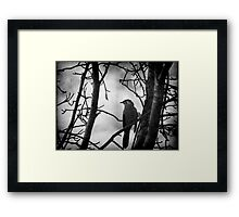 The Honeyeater Framed Print