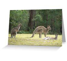Grey Kangaroos, Arrawarra Greeting Card