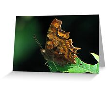 Comma here Greeting Card
