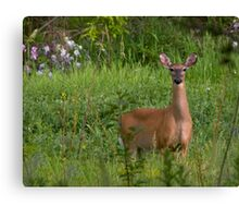 Deer in the camera lens Canvas Print