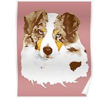 Red Merle Australian Shepherd Dog Portrait Poster
