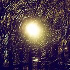 A Light Through The Trees by DarlingDarkling