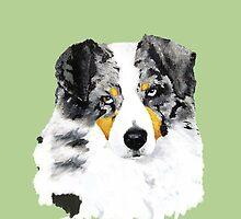 Australian Shepherd Blue Merle Dog Portrait by Barbara Applegate