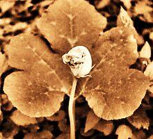 Pumpkin Flower #3 by Amy E. McCormick