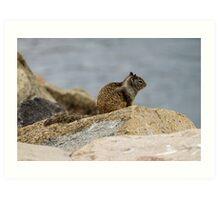 California Ground Squirrel Art Print
