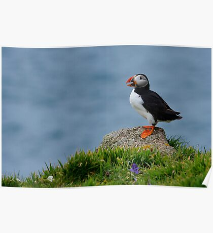 Rock Puffin Poster