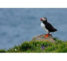 Rock Puffin Photographic Print