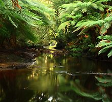 Salmon River , far nor west Tasmania , Australia by phillip wise