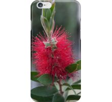 callistemon in the garden iPhone Case/Skin